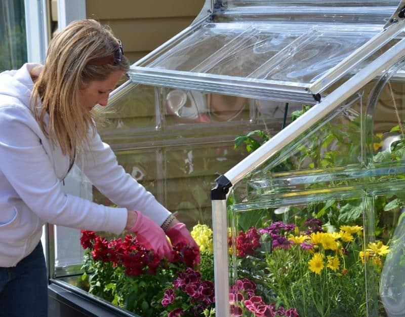 חממה ביתית מיני לגידול פרחים