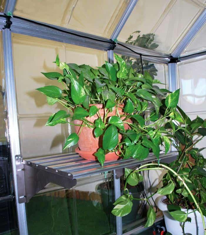 מדף אלומיניום לחממה ביתית עם צמח בית