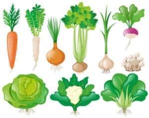 ירקות חורף וגידולם