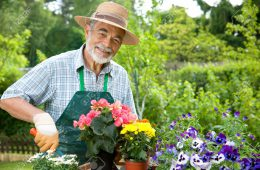 9826761-Portrait-of-senior-man-gardening-Stock-Photo-gardener