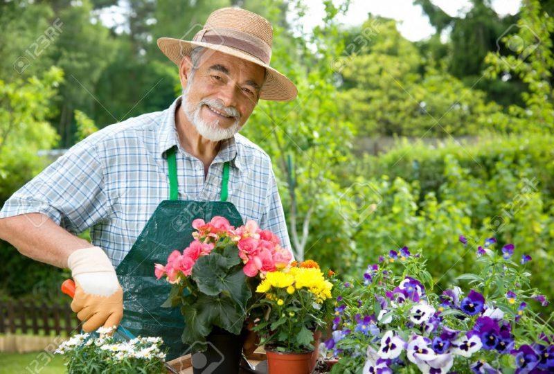 9826761-Portrait-of-senior-man-gardening-Stock-Photo-gardener